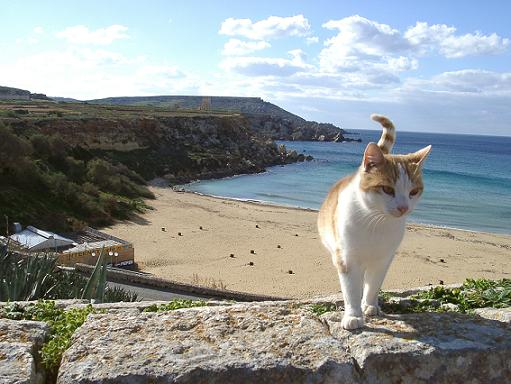 cat-on-vacation