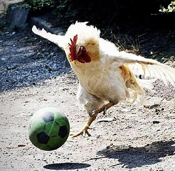 chicken-and-ball-1