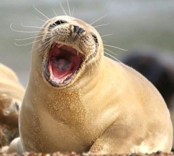 cute-seal-3