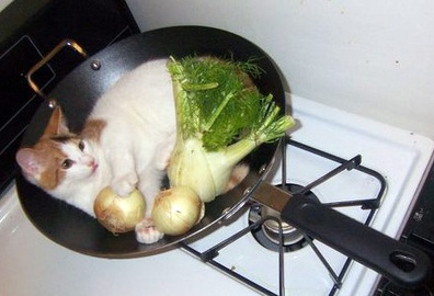 cat-in-wok-3