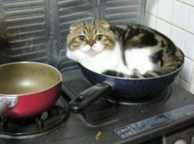 cat-in-wok