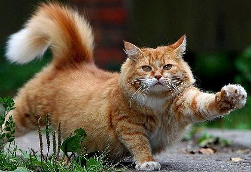 cute-cat-reaching-out