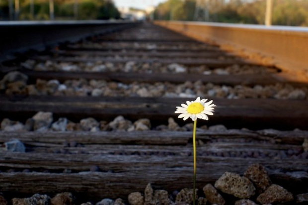 daisy on traintracks.jpg