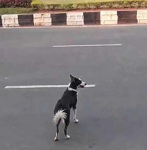 dog-crossing-the-road