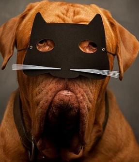 dog-with-mask-7