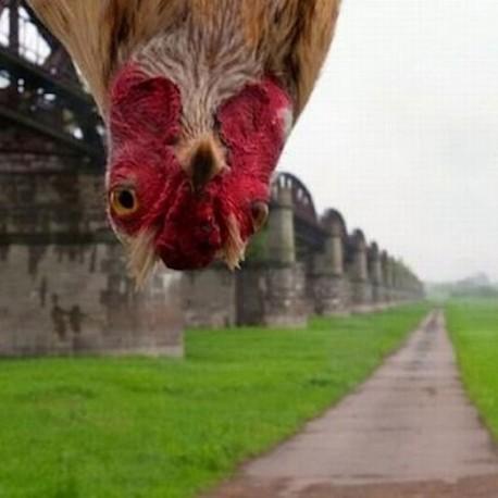 fowl-3.jpeg