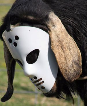 goat with mask-8.jpg