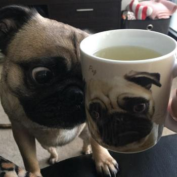 pug-mug-6