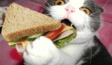sandwich-cat