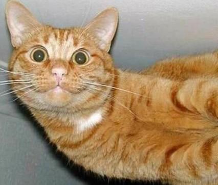 smiling cat.jpg