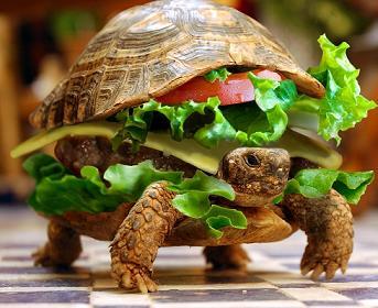 turtle-sandwich
