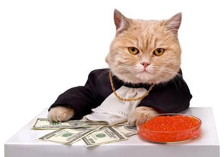 banker cat.JPG