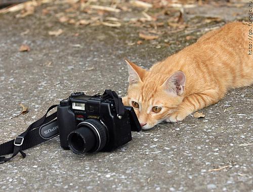 cat-and-camera