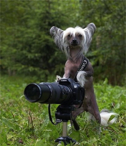 dog-and-camera