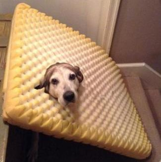 dog and mattress.jpg