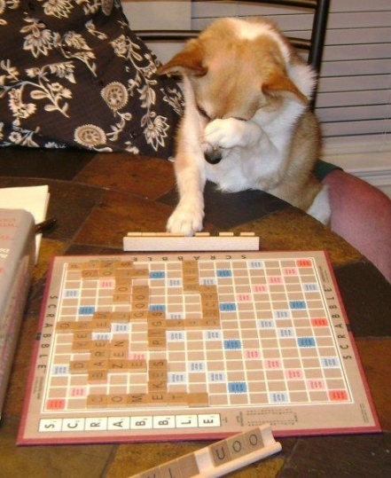 dog-playing-scrabble