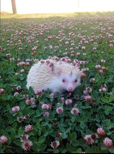 hedgehog-with-flowers
