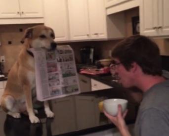 helpful-dog