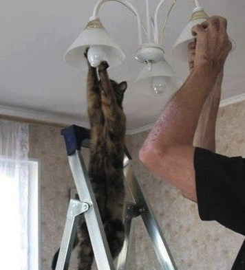 helpful-kitty
