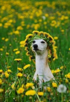 hound with flowers.jpg