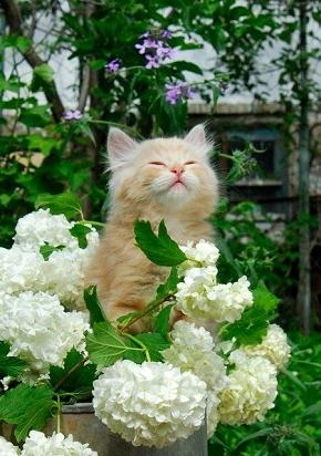 kitten-with-flowers