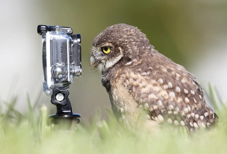 owl-and-camera