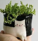 plant-on-cat-flower-pot