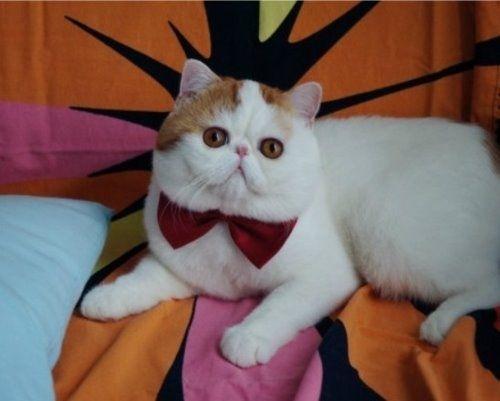 snoopy the cat.jpg
