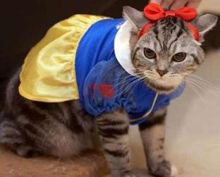 snow white cat.jpg