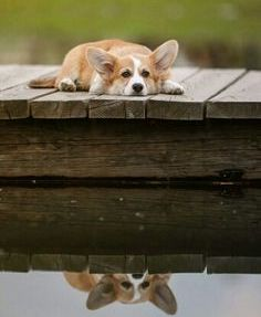 cute-dog-in-deep-thought