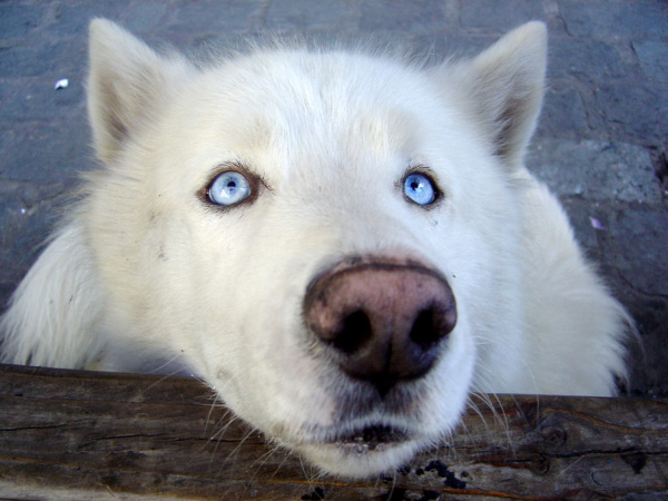 cute dog waiting