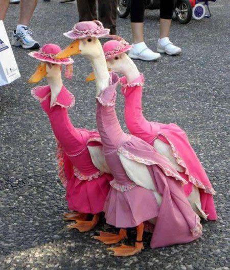 cutte geese.jpg
