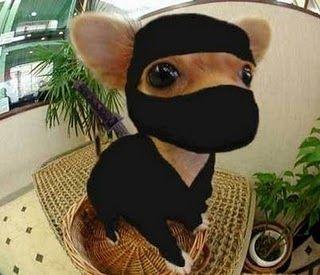 dog-ninja