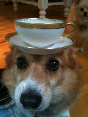 funny doggie serving tea.jpg