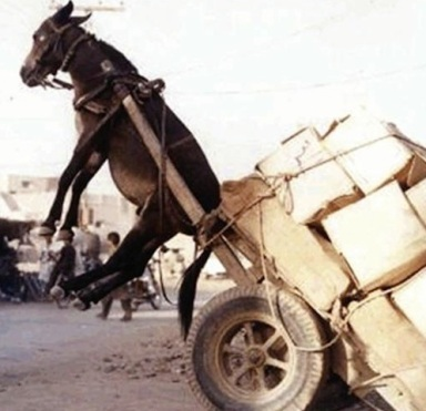 funny donkey.jpg