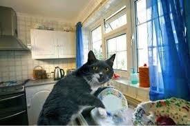 helpful cat.JPG