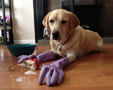helpful dog-2