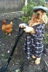 helpful dog-3
