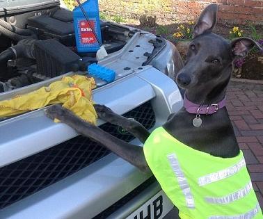 helpful dog-4