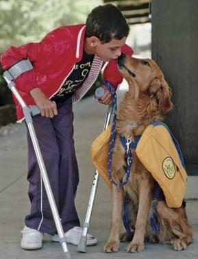 helpful dog-5