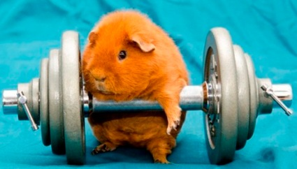 strong hamster