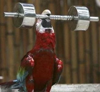 Strong-Parrot-Funny-Animals.jpg