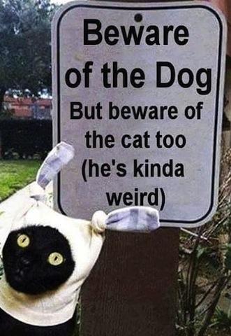 weird cat.jpg