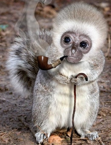 weird monkey.jpg