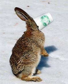bunny with coffee.jpg
