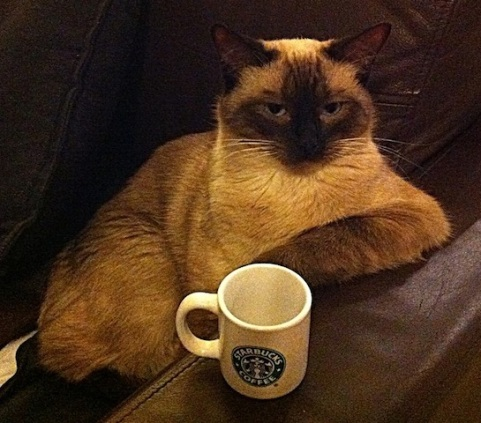 cat with coffee.jpg