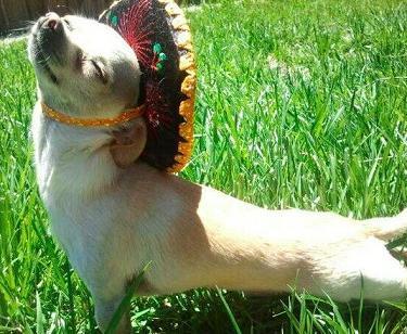 cute puppy enjoying the sun.jpg