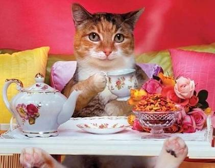 cat having tea