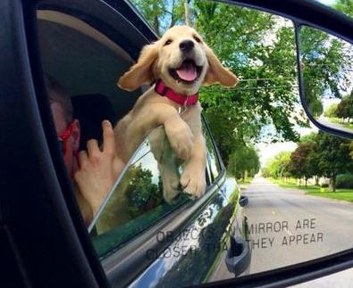 cute doggie smiling.jpg