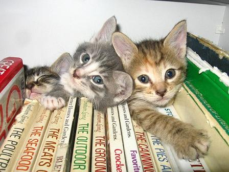 cute kittens in bookshelf